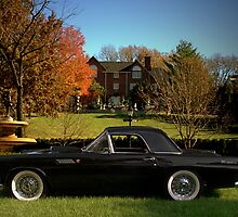 1955 Ford Thunderbird by TeeMack