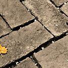 Little Leaf  by DearMsWildOne