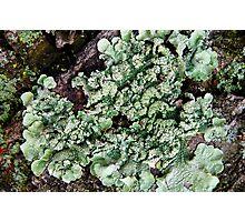 Leafy Greens Photographic Print