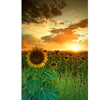 The Sunworshiper Photographic Print