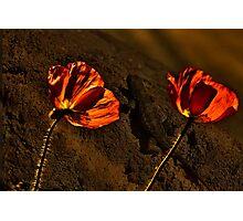 Красные маки  - Red Poppy Photographic Print