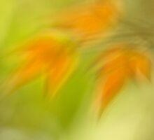 a glimpse of spring by Iris Mackenzie
