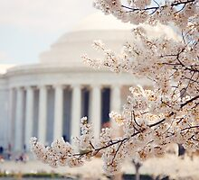 Cherry Blossoms Jefferson Memorial Washington DC by edarlingphoto