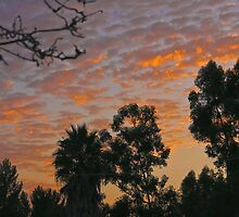 San Diego Dawn by heatherfriedman