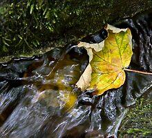 Leaves in the stream 3 by BeardyGit