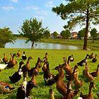 A Cypress Duck Pond by Eileen Brymer