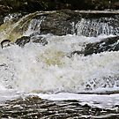 sheen falls salmon by Edward  manley
