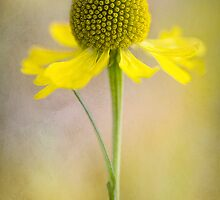 Bliss by Mandy Disher
