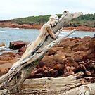 driftwood girl by alana janesse artist/ makeup artist