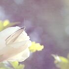 little white butterfly by Iris Lehnhardt