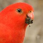 King parrot - Alisterus scapularis by Andrew Trevor-Jones