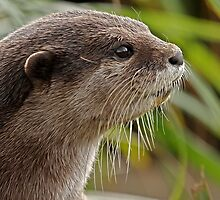Oriental Small-clawed Otter by Mark Hughes