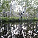 Noosa River Everglades - Reflections 1 by Sammy Nuttall