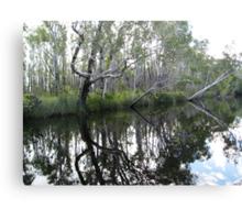 Noosa River Everglades - Reflections 2 Canvas Print