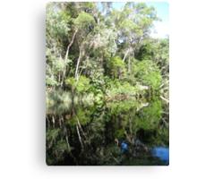 Noosa River Everglades - Reflections 3 Canvas Print