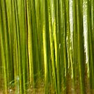 Nature bamboo abstract by Gaspar Avila