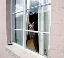 Sphynx in the Window by Glennis  Siverson