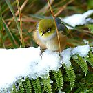 Gosh!! How On Earth Will I &quot;FERNish This Place? - Silver-Eye - NZ by AndreaEL