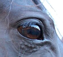Reflection in my Baby's eye by Debra Thomas