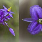 wildflower montage by col hellmuth