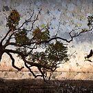 Among the mangroves.  by DaveBassett