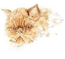ginger persian  cat by ClareLH