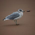 Gull Able by merchant0