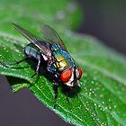 Even Flies can be Pretty by Grinch/R. Pross