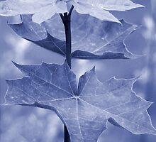 Maple Leaf by Vac1