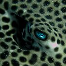 Honeycomb ray eye by shellfish