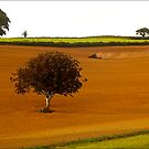Farm Land, South Hams by Mike  Waldron
