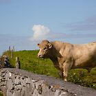 Bull - Ireland by Jenny Hambleton