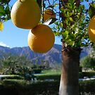 Morning Juice - Coachella Valley Citrus by thammerlund