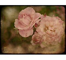 Summer Beauties Photographic Print