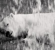 Siesta behind the Falls  by Marcia Rubin