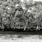 Mangrove Forest by Dean Bailey
