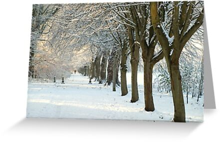 Winter Wonderland in Maynooth, Ireland. by Orla Cahill Photography