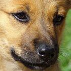 A Puppy! by PatChristensen