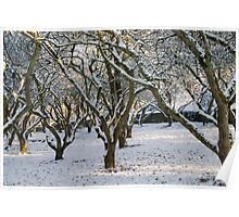 An Orchard of Snow, Ireland Poster