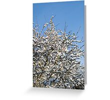 Snowy Branches in a Blue Sky Greeting Card