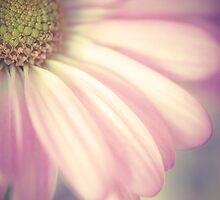 Daisy Dreams by AngelaFanton