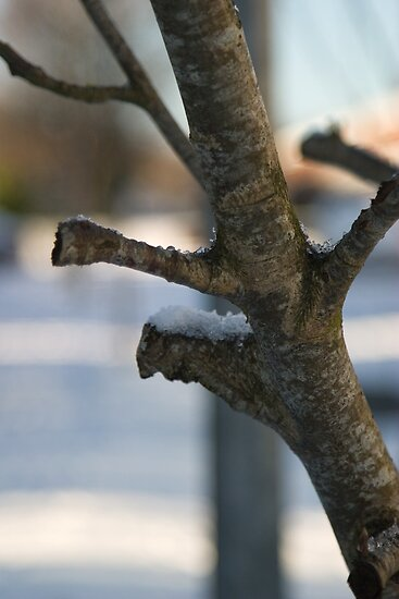 Winter Branch as a Diagonal Composition by Orla Cahill Photography