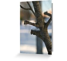 Winter Branch as a Diagonal Composition Greeting Card