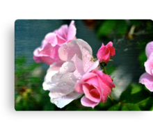 Pretty Pinks Canvas Print