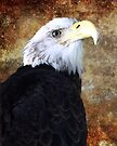 American Bald Eagle - SC State Aquarium, 2011 by Randall Faulkner