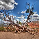 Bryce Canyon by deserttrends