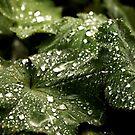 Rain Drops by moor2sea