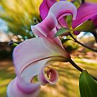Pink Lilium in the garden by Jaxybelle