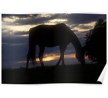 Conquest of Paradise  - Horses . by Brown Sugar .Tribute to - Vangelis . Poster