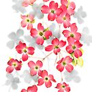 Flowers of the Pink dogwood (Cornus florida) by Terry Bailey